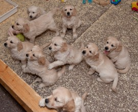 2 miljoen honden