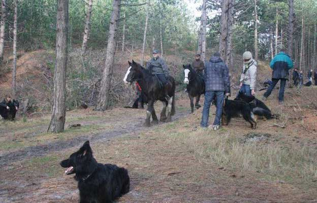 herders-aangelijnd-bij-paarden